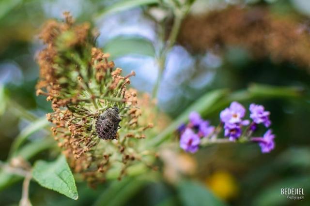 Insecte dans son monde